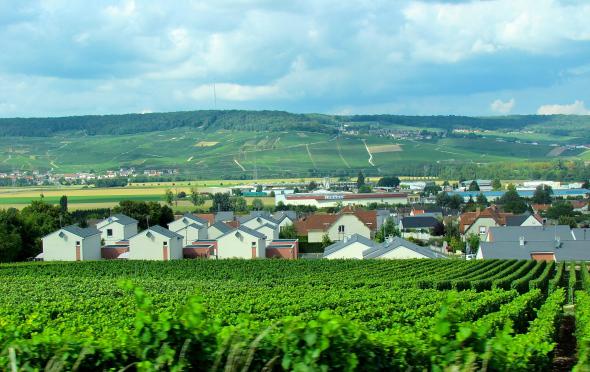country-vineyard