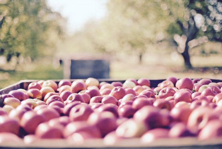 apples-1004886_1280 (1)