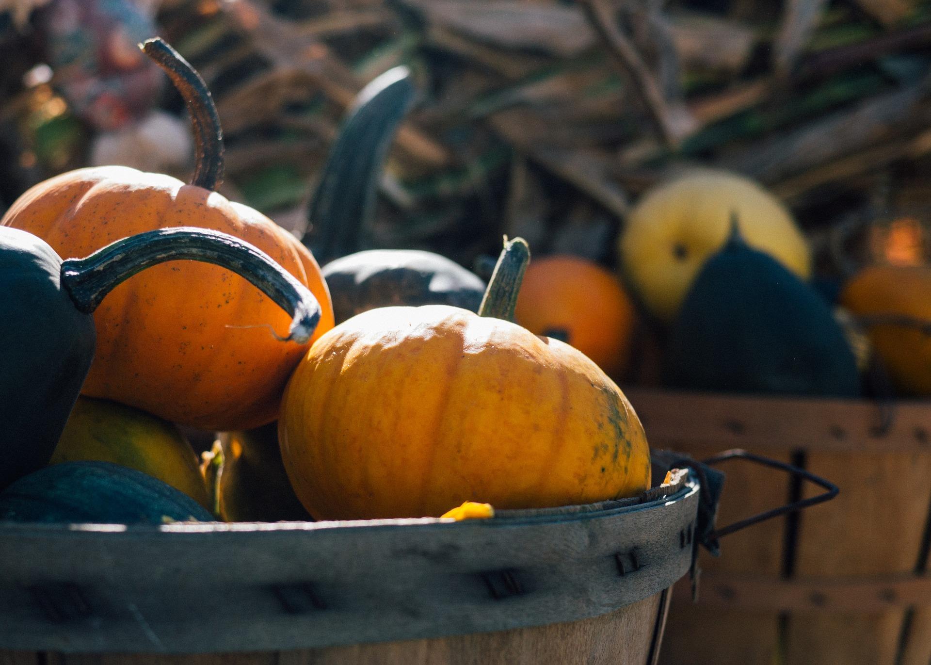 pumpkin-1031292_1920